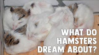 Do Hamsters Have Dreams & Nightmares? 🐹🌛 by ErinsAnimals