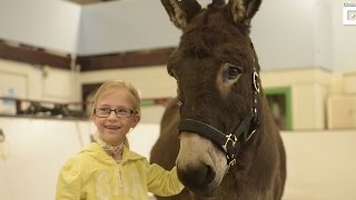 donkey and girl