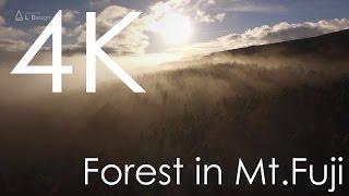 空撮 富士の森の中で [4K]