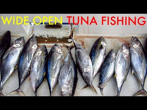 WIDE OPEN YELLOWFIN TUNA FISHING | CATCH AND COOK