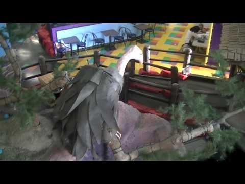 Where to take kids for fun in Coquitlam  - Crash Crawly's Coquitlam BC