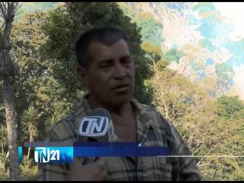 Diversos incendios afectaron varias fincas de café en Cantón El Progreso