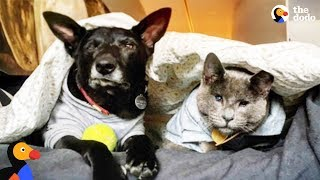 Blind Cat and Dog Go On Adventures Together | The Dodo by The Dodo