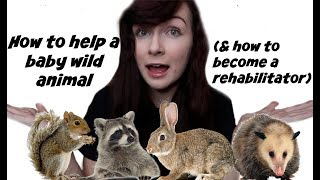 What to Do If You Find A Wild Baby Animal | How I Became a Wildlife Rehabilitator by Maddie Smith