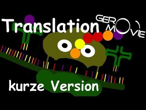 translation - Die Translation ist ein Lehrvideo für Biologie (Zelle) [GeroMovie©] Dies ist die kurze Version, der Translation. Klicke auf den Link