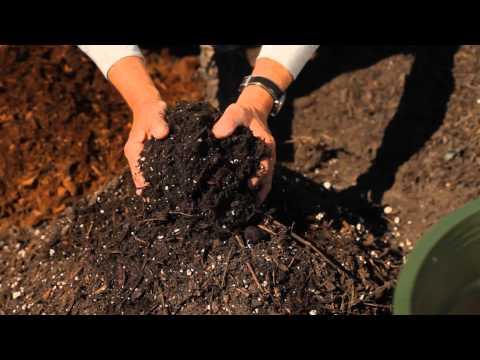 Soil Preparation for Dwarf Gardenias : Garden Savvy