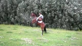 Лошадь и скакалка