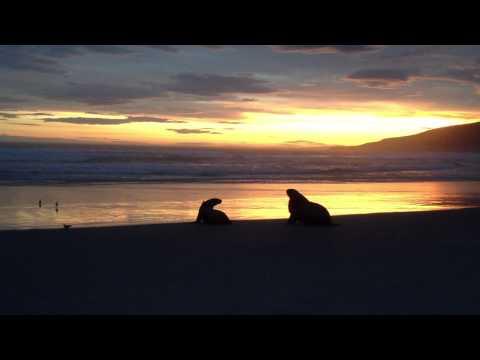 夕陽的雲彩下,海豹也歸家..
