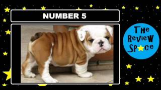 TheReviewSpace Top 10 Cutest Dog Breeds Ever!