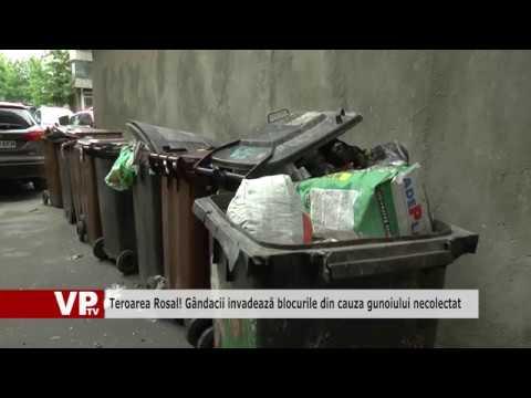 Teroarea Rosal! Gândacii invadează blocurile din cauza gunoiului necolectat