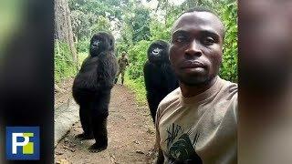 La pose de estos dos gorilas para tomarse una selfie te dejará con la boca abierta