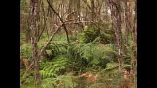Moe Australia  city photo : australian bush moe victoria australia - picture video - music video by kevin macleod