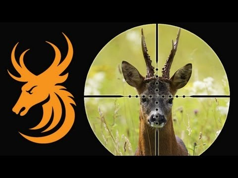 Monster roebuck hunt in Hungary with Wonderhart