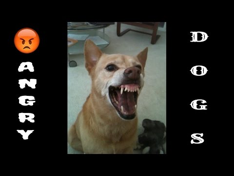 Angry Dog Compilation, Dog Barking, And Fierce Dogs Of All Time.