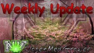Weekly Update 9/21/2017 by  NVClosetMedGrower