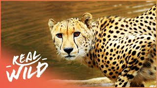 Video The Waterhole [Survival One Hour Documentary] | Real Wild MP3, 3GP, MP4, WEBM, AVI, FLV Juni 2019
