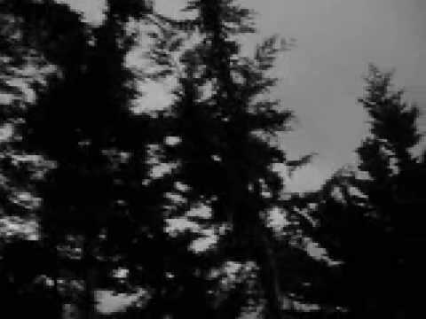 Donna Joe Radio - Shame (видео)