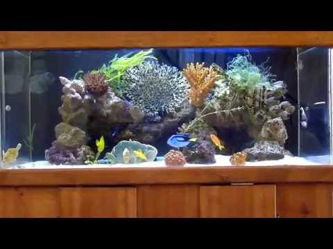 Gallons - 7/18/2013 UPDATE: After 3 years, I've taken this 100 gallons tank down and upgraded to a 240 gallons acrylic tank: http://youtu.be/1GMGTfLIqus 8/10/2013 upda...