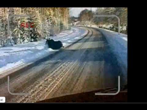 Un orignal se pète la gueule sur la glace!