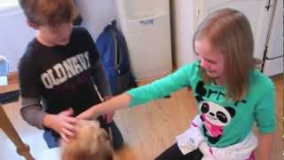 These Kids Always Wanted A Puppy, And Their Dream Comes True!