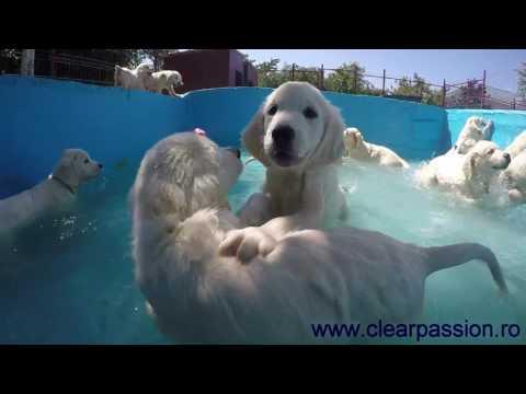 zgraja-lobuziakow-i-ich-pierwsza-zabawa-w-basenie