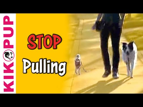 stopping your dog from pulling - Visit our website: http://dogmantics.com/ Buy our new ebook: http://dogmantics.com/store/ Become a fan on facebook: http://www.facebook.com/pages/Dogmantics-...