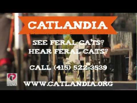 sfspca - Be Better Than Your Friends...Do you see feral cats? Do you hear feral cats? Let us know so we can prevent them from making more cats! Give us a call. We'll ...
