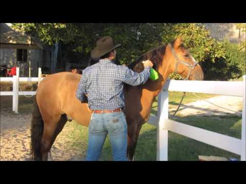 CONSIGLI RAPIDI - Pulizia del cavallo