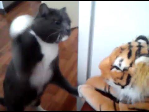 這隻貓咪超生氣自己長得沒有老虎長得這麼拉風,把所有氣出在玩具老虎的模樣會讓你嚇呆!