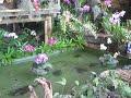 Visita al Orquidiorama de Cali, en una exposición de orquídeas deCali, Bogotá, Medellín, Pereira, USA, Taiwan
