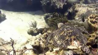 Diving Dalila Reef Cozumel, Mex.