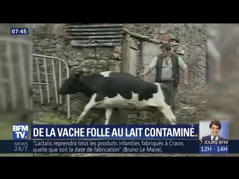 De la vache folle à Lactalis, retour sur les principaux scandales sanitaires