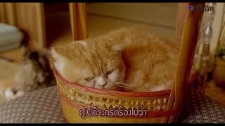 [Review] รีวิว หนังญี่ปุ่นที่มีแมว Rentaneko (Rent-a-Cat) - แมวเช่าอลเวง (2012) l Maewmaka แมวมะ