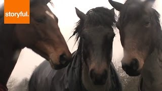 Video Friendly Horses Have Emotional Reunion With Each Other (Storyful, Wild Animals) MP3, 3GP, MP4, WEBM, AVI, FLV Agustus 2018
