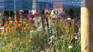 #685 Chelsea Flower Show 2012 - Out of the Blue - Der Christo-Garten
