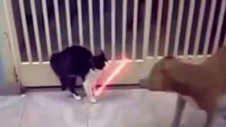 Vidéo de chat drôle - YouTube