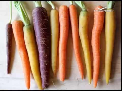 Морковка - DomaVideo.Ru