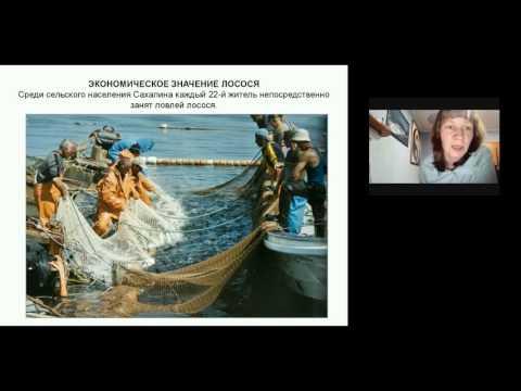 Живая экология. Практический подход в ознакомлении с сахалинскими лососями. Опыт экологической общественной организации в помощь учителю