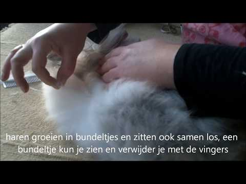 Knaagop: pelsverzorging, kammen, borstelen Teddydwerg konijn