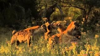 Video Best African lioness mother Tia Vs silver eye part 2 MP3, 3GP, MP4, WEBM, AVI, FLV Oktober 2018