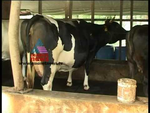 """""""Profitable Cow Farming""""-Money Time 10,June 2012 Part 5"""