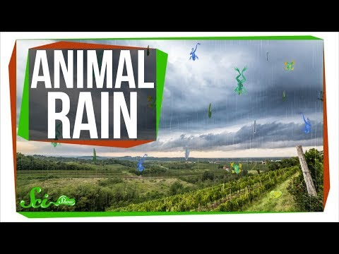 Download Why Frogs Sometimes Fall From the Sky HD Mp4 3GP Video and MP3