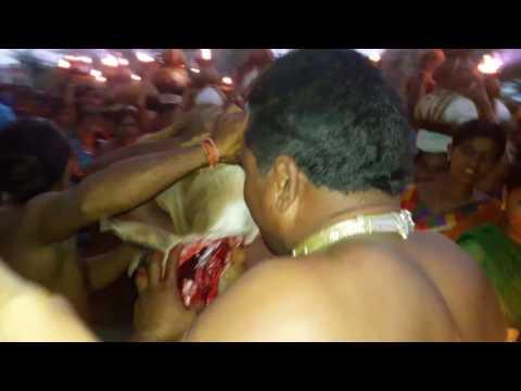 Video Beerappa festivel  Bollepally gudur warangal 2016 download in MP3, 3GP, MP4, WEBM, AVI, FLV January 2017
