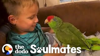 Parrot Follows Her Favorite Kid Everywhere | The Dodo Soulmates by The Dodo