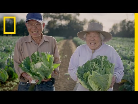 I had no idea what a kumara is but i find this old Chinese couple with Kiwi accent adorable