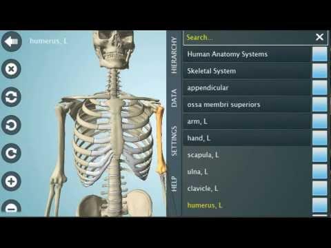 Anatomy 3D: Aplicación para aprender en 3D sobre anatomía y ...