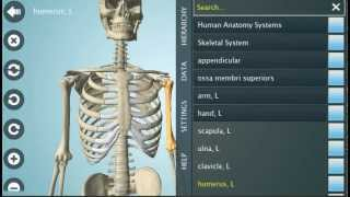 Anatomy 3D Pro - Anatronica YouTube video