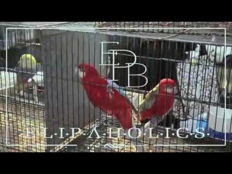 "Elipa Park Boys – ""Elipaholics"" [Videoclip]"