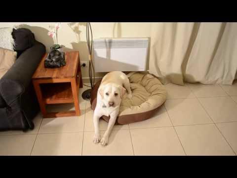 Comment Apprendre à son chien à donner la patte facilement en 3 étapes