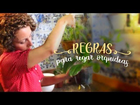 Como Cuidar de Orquídeas - Como regar o vaso